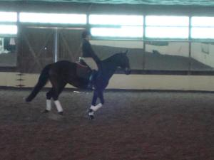 The Dark Mare at a dressage clinic, 2011