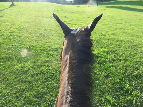 """""""Between the ears""""... Anna hacking on the Tamarack cross country course."""