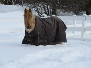 My horse, Carmel, after the New England Blizzard of 2015.