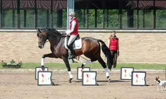 Book Review:  Cavaletti for Dressage and Jumping