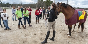 Retired UNH horse Flash models the equine digestive system for students participating in the 2013 Equine Education Day.