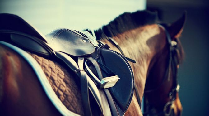 Hilary Clayton: Biomechanical Interactions Amongst the Rider, the Tack and the Horse