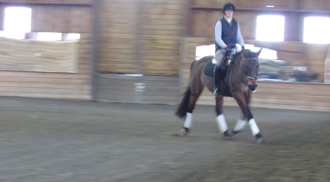 Improving Balance in the Non Traditional Dressage Horse: a ride with Jen Verharen