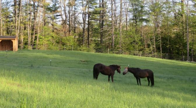 Managing your Velociraptors…Or your herd of mares