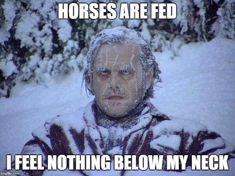 horsesfed