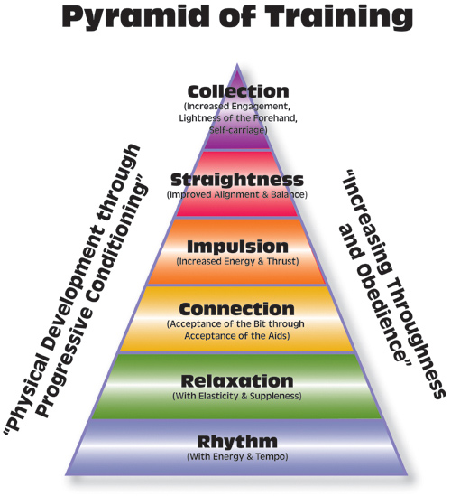 dressage-training-pyramid.jpg