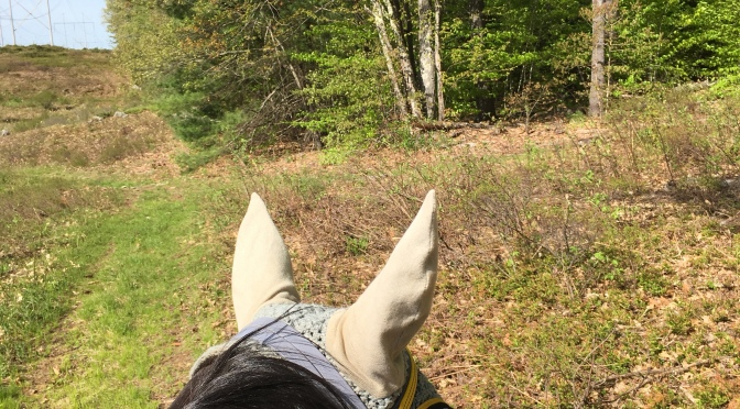 Book Review: Inside Your Ride: Mental Skills for Being Happy and Successful with your Horse