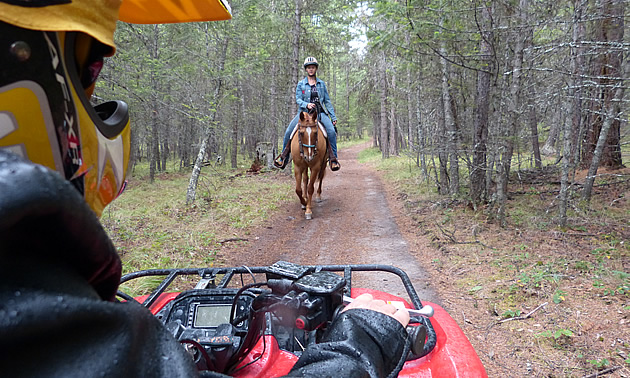 horses-atvs630